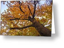 Autumn Dreams Greeting Card