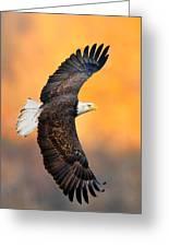 Autumn Eagle Greeting Card