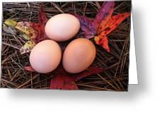 Autumn Eggs Greeting Card