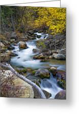 Autumn Fall Bend Greeting Card