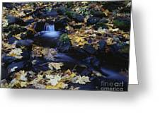 Autumn Fall Colors Starvation Creek State Park Greeting Card