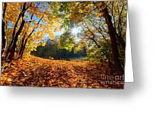 Autumn Fall Landscape In Forest Greeting Card