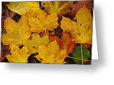 Autumn Fallen Maple Greeting Card