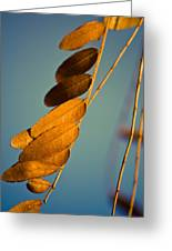 Autumn Feathers Greeting Card