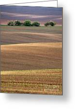 Autumn Fields Of Moravia Greeting Card