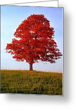 Autumn Flame Greeting Card