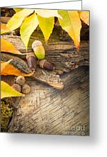 Autumn Forest Background Greeting Card