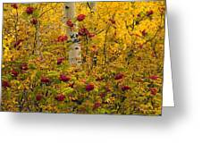 Autumn Forest Colors Greeting Card