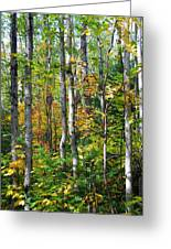 Autumn Forest Detail Greeting Card