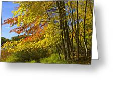 Autumn Forest Scene In West Michigan Greeting Card