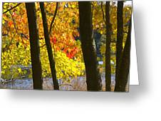 Autumn Forest Scene Greeting Card