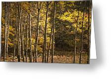 Autumn Forest Scene With Birches In West Michigan Greeting Card