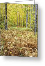 Autumn Forest - White Mountains New Hampshire Greeting Card