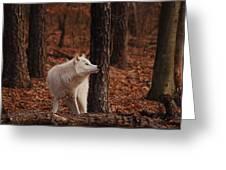 Autumn Gaze Greeting Card