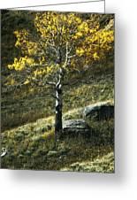 Autumn Glow - Yellowstone Greeting Card