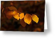 Autumn Gold Greeting Card by Peter Skelton
