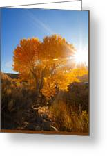 Autumn Golden Birch Tree In The Sun Fine Art Photograph Print Greeting Card
