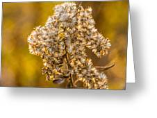 Autumn Goldenrod And A Poser Greeting Card