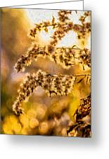 Autumn Goldenrod - Paint  Greeting Card