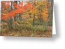 Autumn Golds Greeting Card by Margaret McDermott