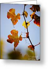 Autumn Grapevine Greeting Card by Dry Leaf