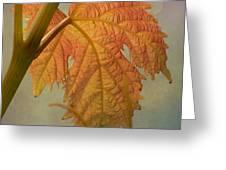 Autumn Grapevine Greeting Card by Fraida Gutovich