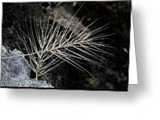 Autumn Grasses Greeting Card