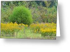 Autumn Grasslands Greeting Card