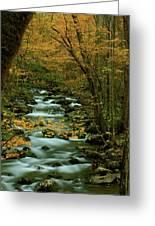 Autumn Greenbriar Cascade Greeting Card