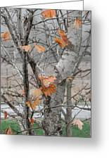 Autumn Grey Greeting Card by Margaret McDermott