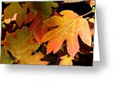 Autumn Hues Greeting Card