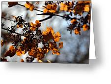 Tardiva Hydrangea Greeting Card