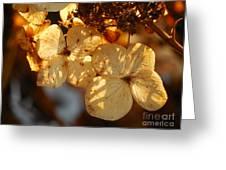 Autumn Hydrangeas I V Greeting Card