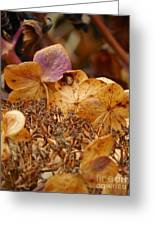 Autumn Hydrangeas V Greeting Card