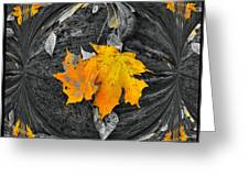 Autumn In Color Greeting Card