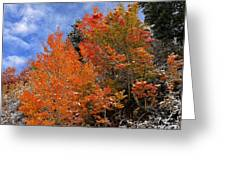 Autumn In Idaho Greeting Card
