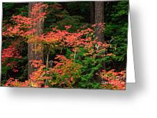 Autumn In Mount Rainier Forest Greeting Card