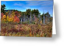 Autumn In The Adirondacks Greeting Card by David Patterson