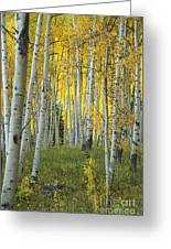 Autumn In The Aspen Grove Greeting Card