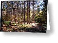 Autumn In The Pines Greeting Card