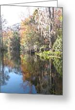 Autumn In A Swamp Greeting Card