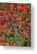 Autumn In The Wasatch Range Greeting Card