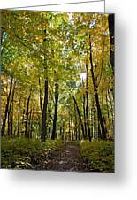 Autumn In Uw Arboretum In Madison Wisconsin Greeting Card by Natural Focal Point Photography