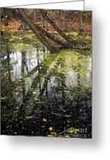 Autumn In Wildwood Park Greeting Card