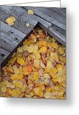 Autumn Incoming Greeting Card
