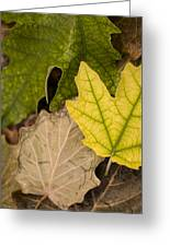Autumn Is Coming 1 Greeting Card