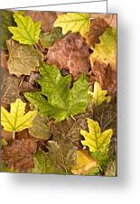 autumn is coming 5 - A carpet of autumn color leaves  Greeting Card
