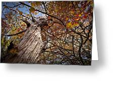 Autumn Is Here Greeting Card