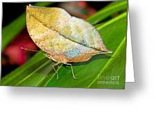 Autumn Leaf Butterfly Greeting Card