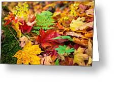 Autumn Leaf Salad Greeting Card